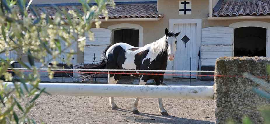 ballade-cheval