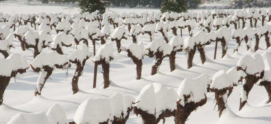 vignes-neige